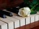 Playback MP3 Turning Tables - Karaoké MP3 Instrumental rendu célèbre par Adele