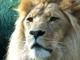 The Lion Sleeps Tonight custom accompaniment track - The Mavericks