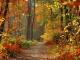 A la faveur de l'automne custom accompaniment track - Tété