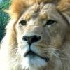 Karaoké I Just Can't Wait To Be King (Elton John) The Lion King (1994 film)