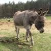 Le petit âne gris Karaoke Hugues Aufray