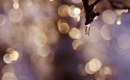 The Reason - Céline Dion - Instrumental MP3 Karaoke Download