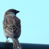 Bird On The Wire Karaoke Leonard Cohen