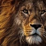 Karaoke Der ewige Kreis The Lion King (1994 film)